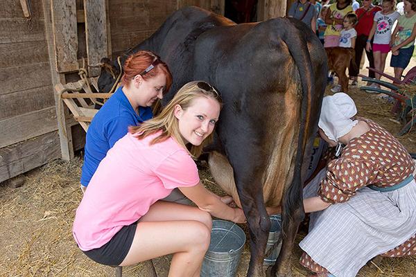 milking cows at Conner Prairie