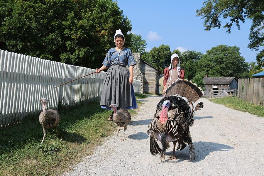turkeys at Prairietown