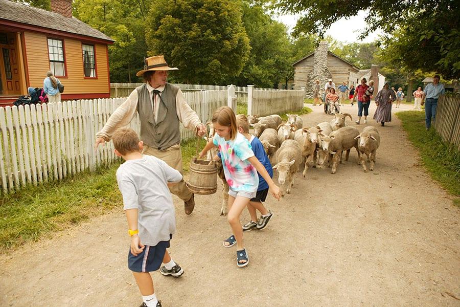 Animal Encounters - sheep
