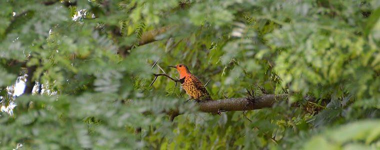 Outdoor Excursions - Birds
