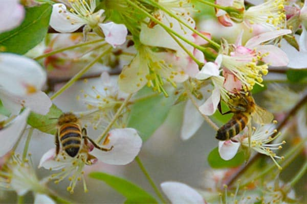 spring bees on flowers
