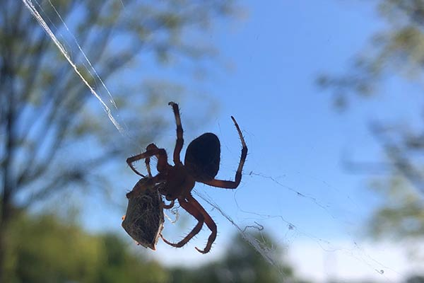 Playtime on the Prairie: Spiders