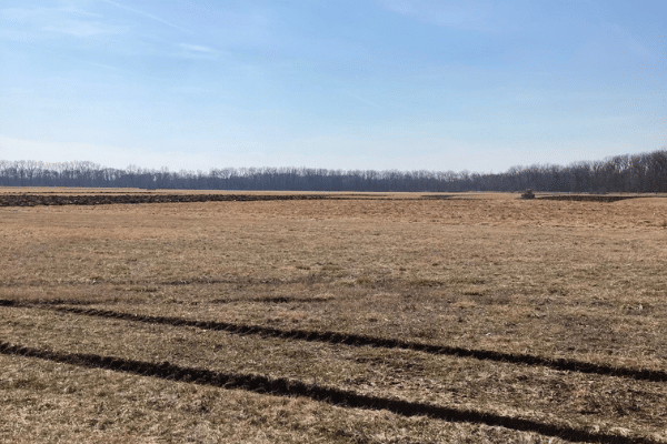 Signs of spring in the Conner Prairie field