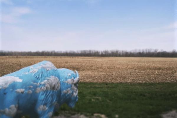 Blue Buffalo statue overlooking field