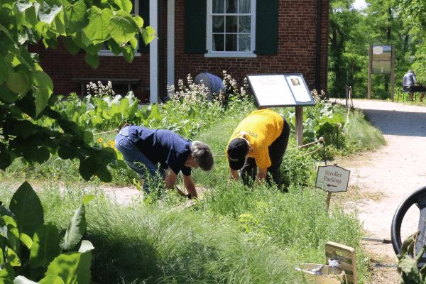 Conner Prairie Volunteers in the garden