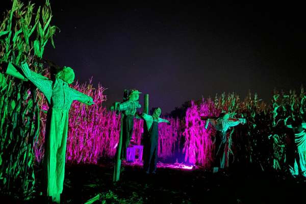 Scarecrows In Corn Field At Night